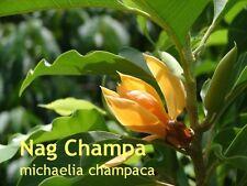 ***Nag Champa Marrakesch Parfümöl, 20ml, orientalisch-exotisch