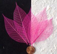 25 Skeleton Leaves Bright Hot Pink see through leaf veins cards invitations med