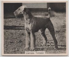 Airedale Terrier 1930s Champion Dog Breed Canine Pet Ad Trade Card