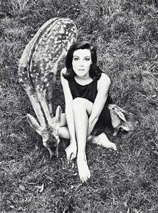 1966 WINGATE PAINE Vintage Fashion Woman With Deer Rabbit Animal Photo Art 11x14