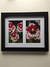 """Miltonia """"Pansy"""" Orchid Framed Flower Photos 11.25"""" x 9.25"""""""