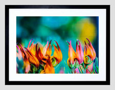 Nature Photo & Picture Clip Frames/Frameless Frames