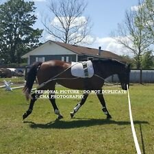 NEW Horse Lunging Training System (Pessoa based) & 10% to Equine Rescue