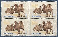 ROUMANIE 1964 n°2061** en bloc de 4 Chameau, camel  MNH