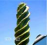 10Seed/Bag cactus Rebutia variety flowering color mini plant succulent