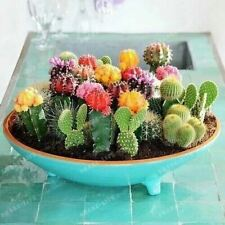 100 pcs/pack Mixed Cactus Seeds Multifarious Ornamental Plants 100 attractive im