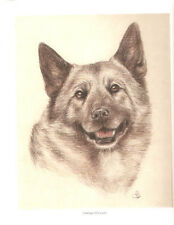Norwegian Elkhound Head Study Open Edition Print by Uk Artist Vic Bearcroft