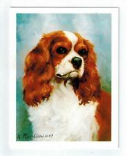 New Cavalier King Charles Spaniel Note Card Set 12 Notecards By Ruth Maystead