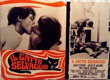 fotobusta lobby card IL GATTO SELVAGGIO Andrea Frezza Carlo Cecchi de ceresa