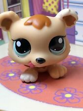 Littlest Pet Shop~#1554~1 Petriplets~Bear Cub~Beige Brown White~Blue Dot Eyes