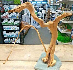 Red Moor Wood Root on Slate Aquarium bogwood driftwood Vivarium decor
