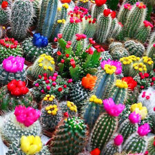 Seeds Cacti Cactus Mix Succulents Barrel Beatuful Plant Balcony Garden Ukraine