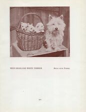 WESTIE WEST HIGHLAND WHITE TERRIER MOTHER AND PUPS OLD VINTAGE 1934 DOG PRINT