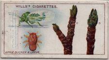Apple Sucker Fruit Plant Pest 100+ Y/O Trade Ad Card