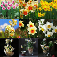 400Pcs Mixed Daffodil Double Narcissus Bulbs Seeds Spring Plant Flower Decor