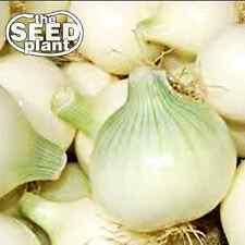 Crystal Wax Onion Seeds - 350 SEEDS NON-GMO