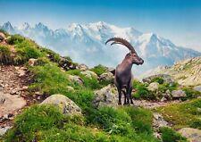 A1 Alpine Ibex Poster Art Print 60 x 90cm 180gsm - Mont Blanc France Gift #16280