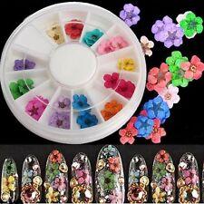 12 Color 36pcs Real Dry Dried Flower 3D UV Gel Acrylic False Tips Nail Art Salon