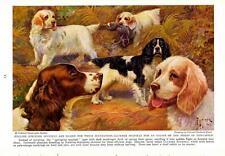 """1937-Edward Herbert Miner: English Springer Spaniels-Clumber- Vtg Print 7x9.5"""""""