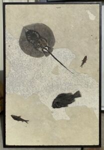 A Beautiful Stingray Fossil Fish Mural from Wyoming