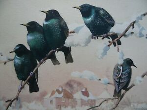 Starlings in a Suburban Winter Landscape. Harrow? WC by Kenneth Brookes c1950