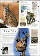 Bobcat #254 Mammals - Discovering Wildlife Fact File Fold-Out Card