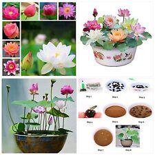 Bonsai Lotus Seeds,Water Lily Flower Plant,20Pcs Finest Viable Aquatic Water Fea