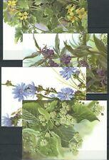 Ukraine - Postkartensatz Heilpflanzen (4 Karten)