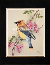 """Cedar Waxwing Art Print 8""""x10"""" Mat Backyard Birds By Realism Artist Roby Baer"""