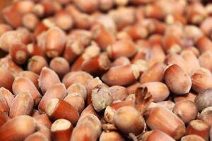 Haselnüsse in Schale, Dicke, neue Ernte