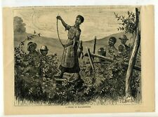 A STRING OF BLACKBERRIES, Harper's Weekly 1874 WOOD ETCHING F. S. Church