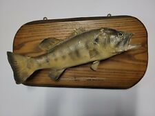 Giant largemouth bass mount / man cave/ fishing/ rustic cabin decor/ taxidermy