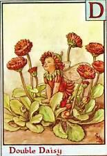 Double Daisy Alphabet Flower Fairy Original Vintage Print by Cicely Mary Barker