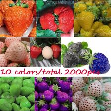 Sweet Strawberry Giant Potted  Plant Fruit Everbearing Vegetable Seeds 10 Color