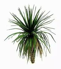 1/35 scale model palm tree Jungle palm (grass leaves).18cm height- TPV-003