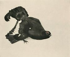 Original Signed KURT MEYER-EBERHARDT Roulette Drypoint with Hand-Color Two Birds