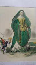 Illustration de Grandville - Fleurs Animées - Nénuphar -