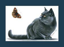 British à Poil Court chat bleu objet de fascination par I garmashova