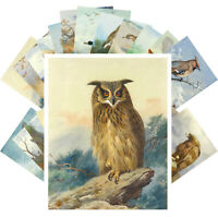 Postcards Pack [24 cards] WILD BIRDS  Thorburn Vintage Museum Painting CC1372
