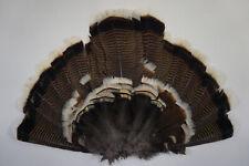 Juvenile Merriam'S Wild Turkey Tail Fan/Turkey Feathers/Turkey Decoys