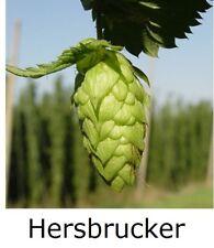 """1x HOPS 4"""" pot * HERSBRUCKER * ( Home brewing perennial plant hop bine vine"""
