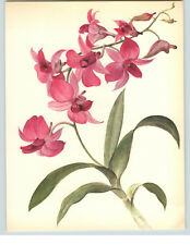 1922 Color Book Plate Framable Orchid Images Dendrobium phalaenopsis Bright Pink