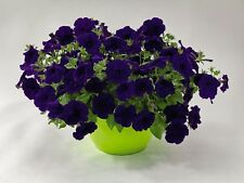 """Trailing Petunia Seeds Success Blue 25 Pelleted Seeds """"NEW"""" true color"""