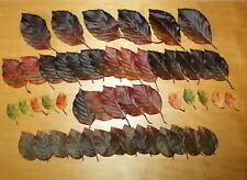 50 Laubblätter Herbstlaub Buchenblätter Seidenblumen Tischdeko Floristik  BL 124