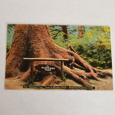 Vintage Elephant Tree Redwood Highway CA Linen Postcard Unposted
