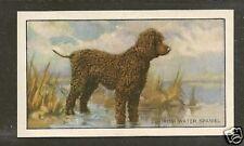 1936 Uk Dog Art Full Body Gallaher Series A Cigarette Card Irish Water Spaniel