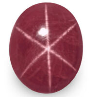 IGI Certified VIETNAM Star Ruby 9.91 Cts Natural Untreated Magenta Red Oval