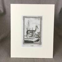 1791 Antico Stampa Animali Corine Originale 18th Secolo Incisione Francese