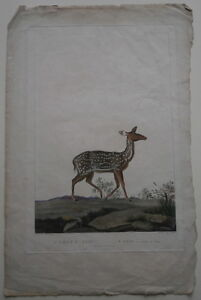 Antique French Marechal Hand Colored Copper Engraving of Axis Deer Paper Print