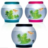 5 Litre Glass Fish Bowl LED Light Aquarium Goldfish Sentik in Pink Black or Blue